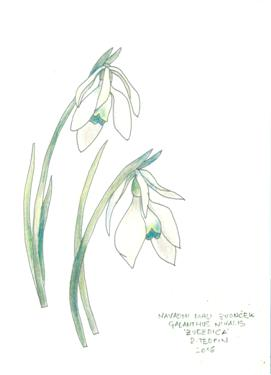 galanthus greeting card 2208