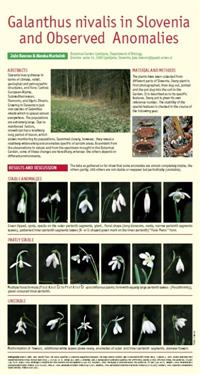 Galanthus nivalis in Slovenia,  Anomalies galanthus, special galanthus